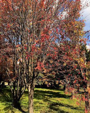 Hakodate, Hokkaido (Autumn 2017) – Part 1
