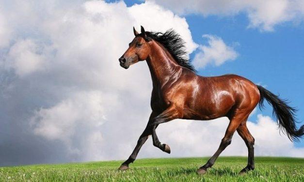 Launch of Financial Horse Course + Early Bird Promo