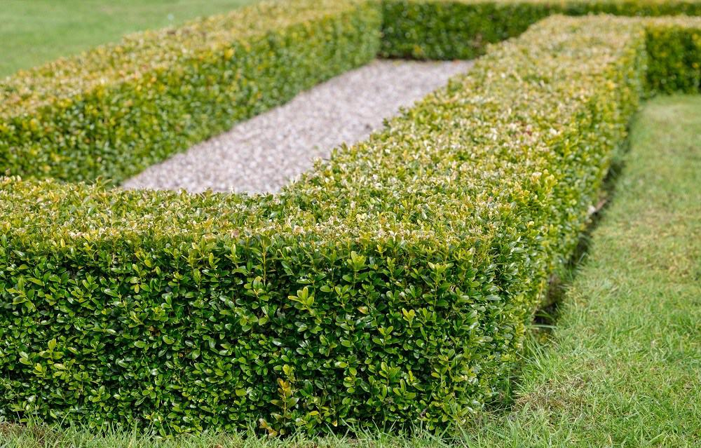 Risk management as a hedge against uncertainty