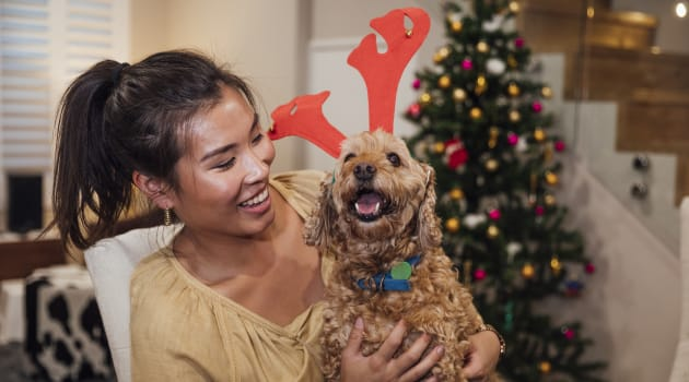 4 Affordable Gifts to Get For Your Pet This Holiday Season