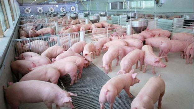 An Undervalued Market Leader in the Animal Feed Industry